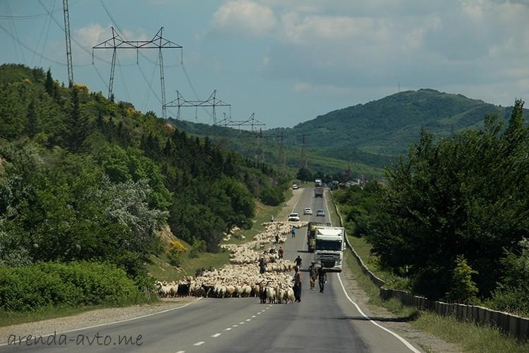 Овцы на трассе возле Тбилиси